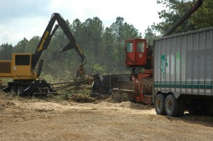 Cover photo for Timber Sale Process Using a Professional