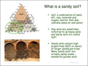 Cover photo for Gardening in Sandy Soils