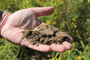 Cover photo for Gardening in Sandy and Acidic Soils