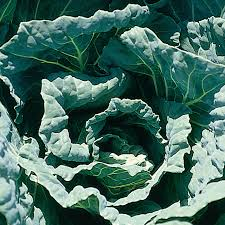 Cover photo for Collards - a Southern Tradition