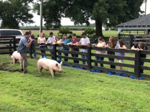 Cover photo for Advanced Livestock Judging Program